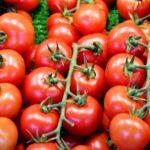 tomate1
